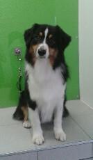 avis Fashion Dog